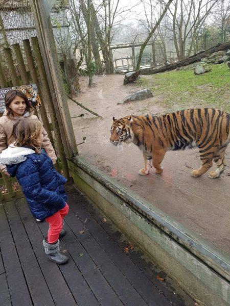 aller au zoo