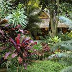 Jardin exotique durable