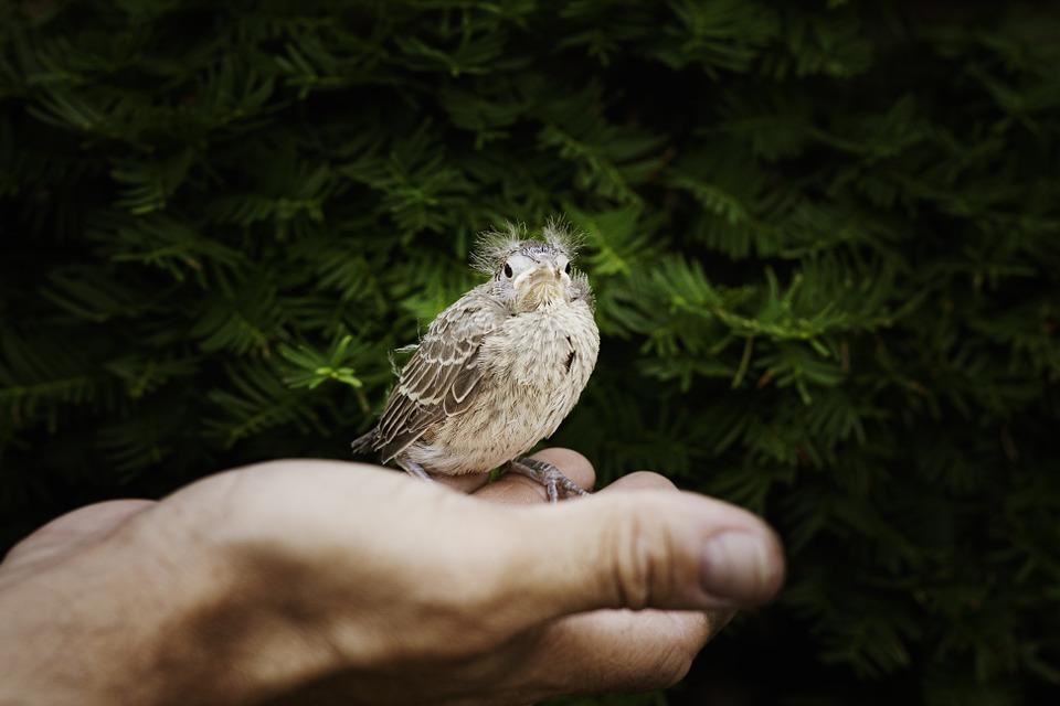 formation soigneur animalier