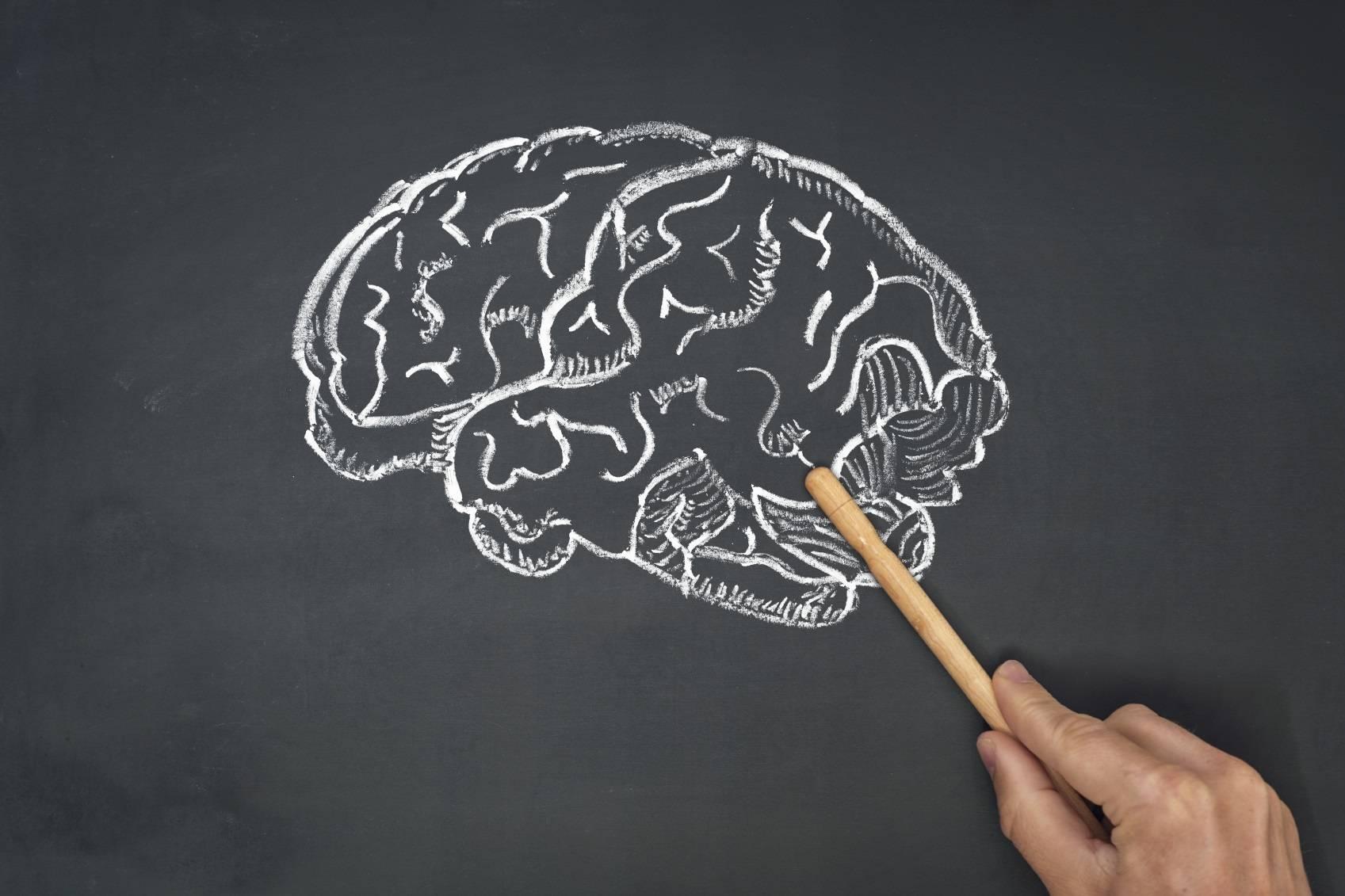 Le cerveau crée des structures à 11 dimensions