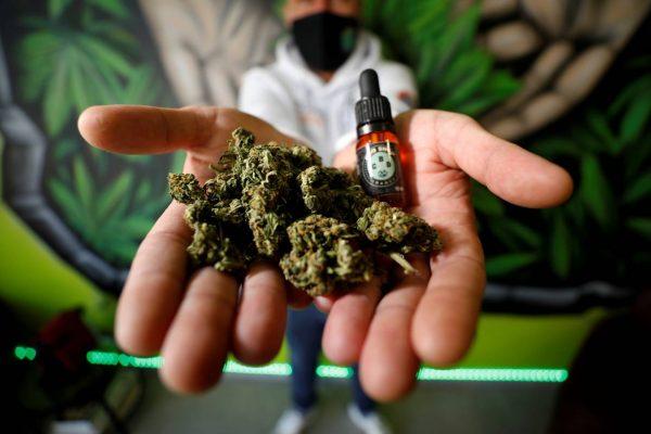 Législation CBD cannabis en france